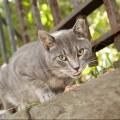 Katteeventyr billede