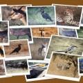 Shamwari: Et vildt liv billede
