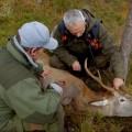 Ud i naturen: Hjort i sigte billede