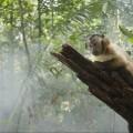 Amazonia billede