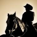 Præriens sorte rytter billede